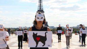 Happening chats des rues à Paris.