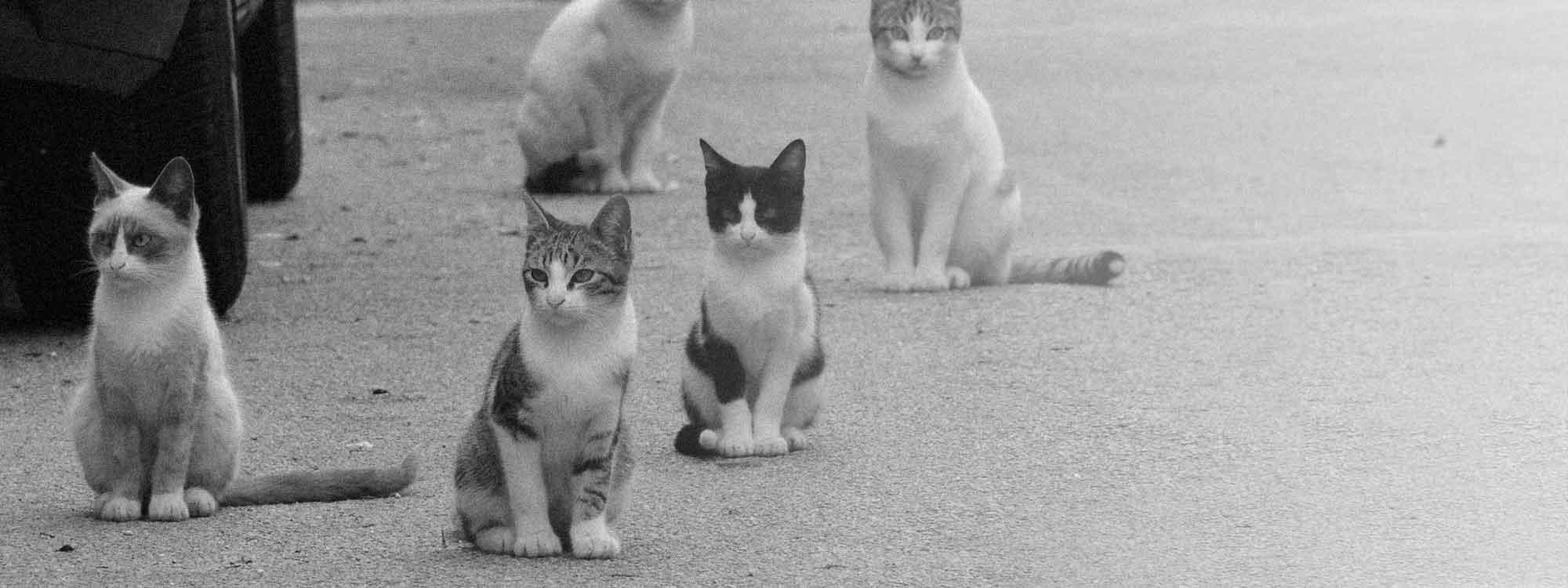 Pour une évolution de la condition des chats libres