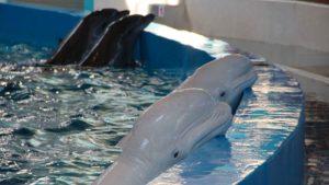Propositions pour les delphinariums