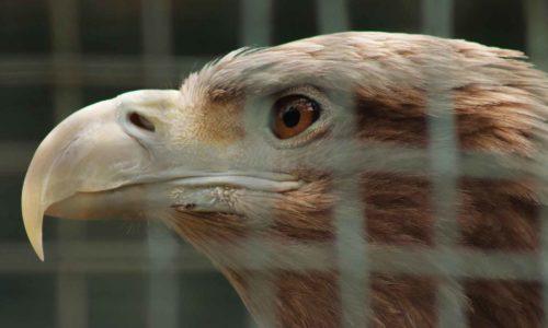 Propositions concernant les animaux sauvages détenus en captivité