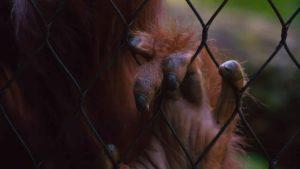 Propositions pour les parcs zoologiques