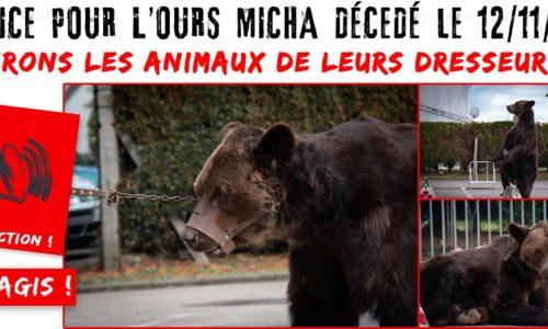 Lettre à Élisabeth Borne pour demander la saisie des animaux du couple de montreurs d'ours Poliakov-Bruneau
