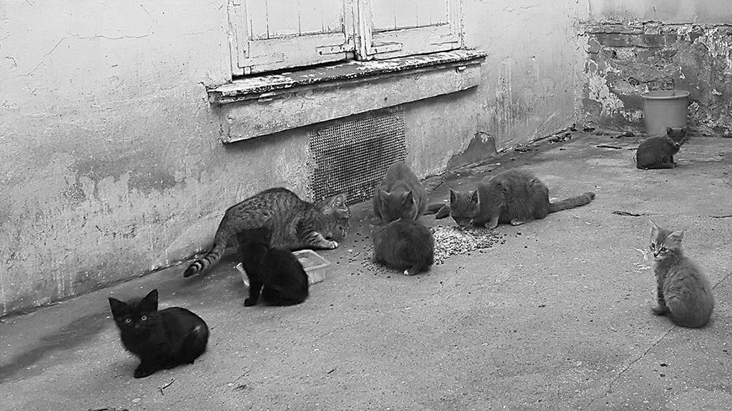 Deux amendements au budget 2020 de la ville de Paris en faveur des chats des rues