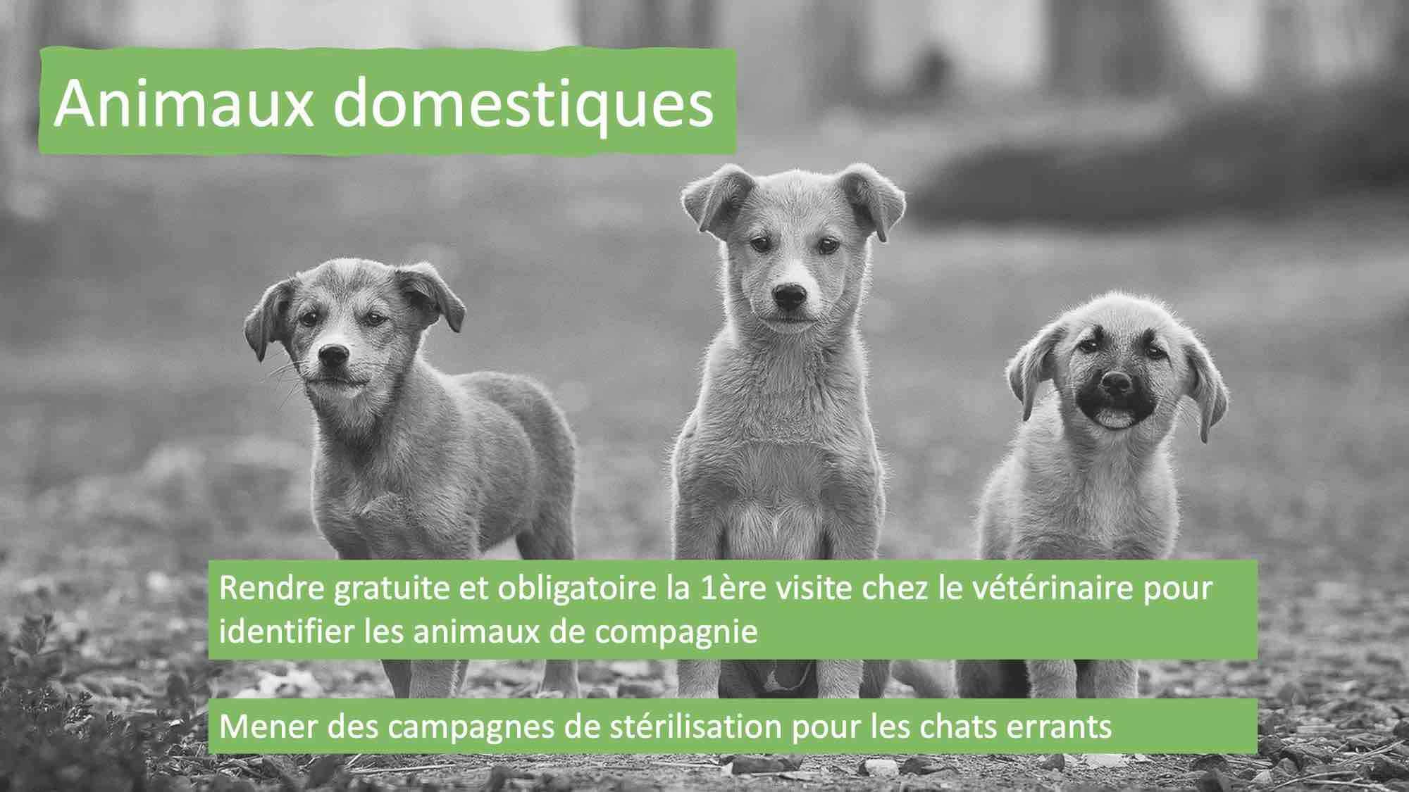 ECA appuie les 20 mesures pour les animaux