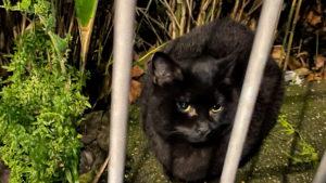 L'absence d'immatriculation des chats enfin sanctionnée