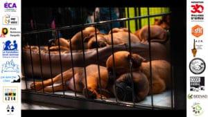 Marchandisation des animaux : lettre collective à Mme Hidalgo
