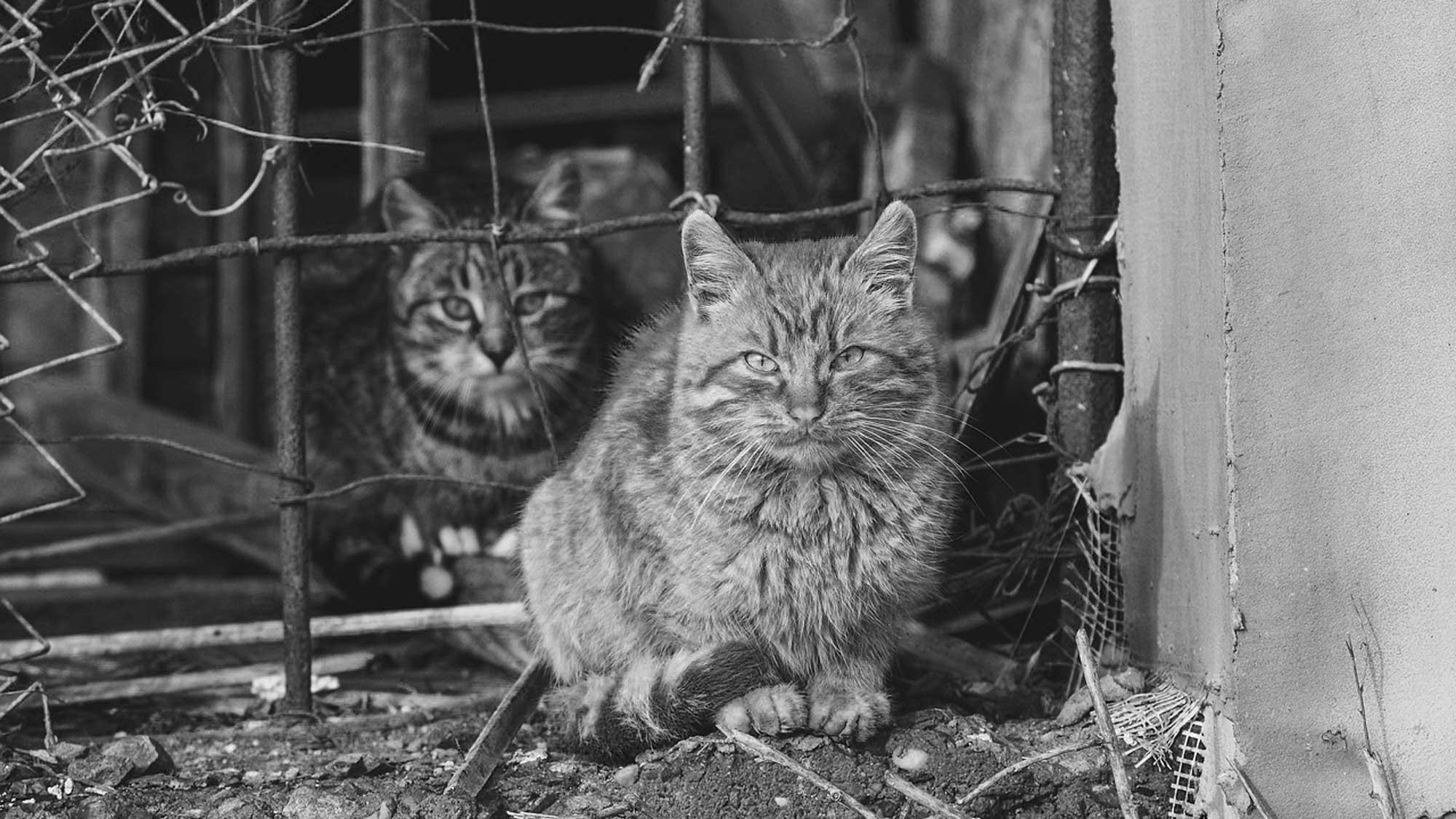 Mairie du 14e :  pas un centime pour les chats errants