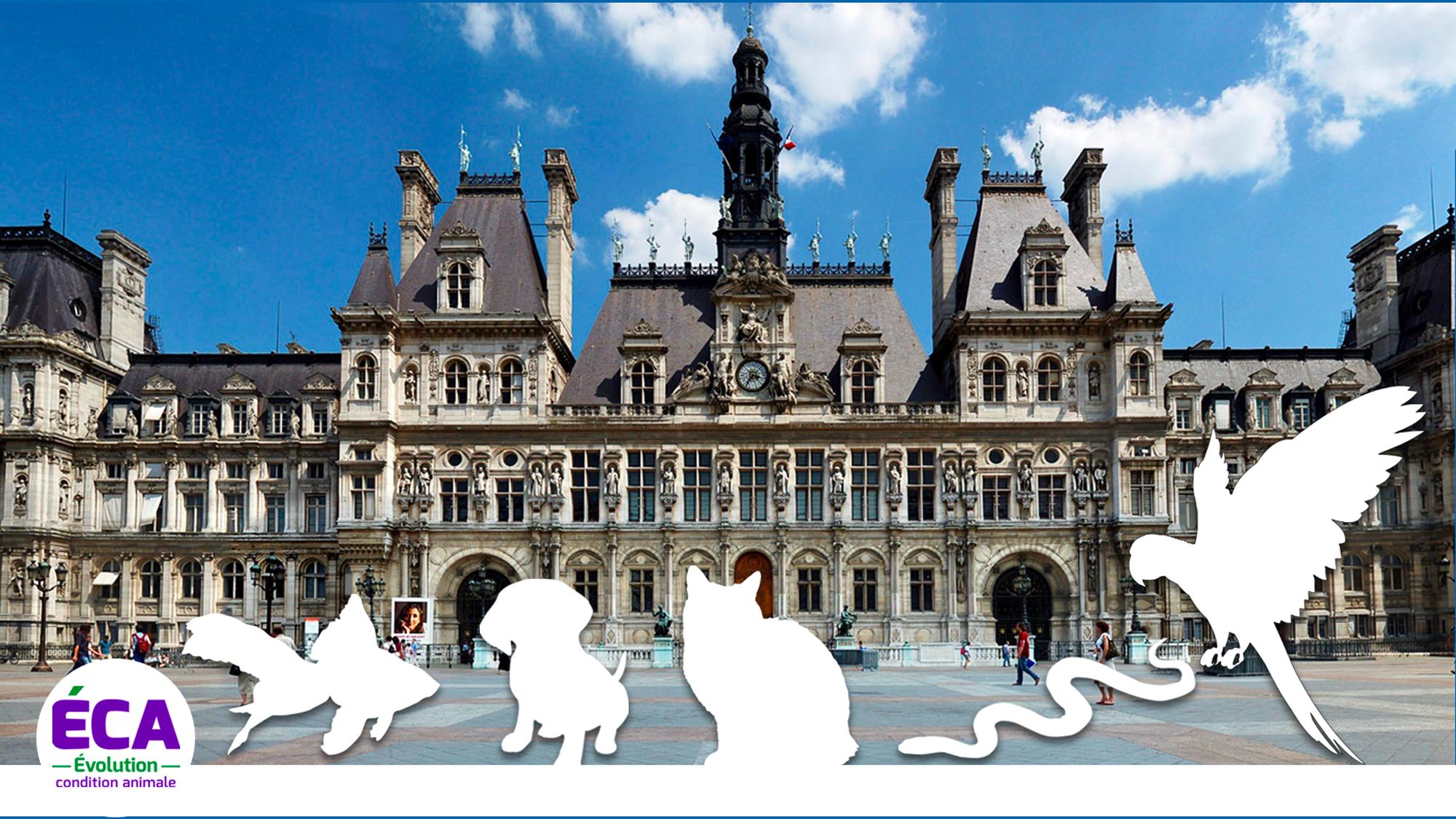 Read more about the article Exposition et vente d'animaux de compagnie : une avancée et des zones d'ombre